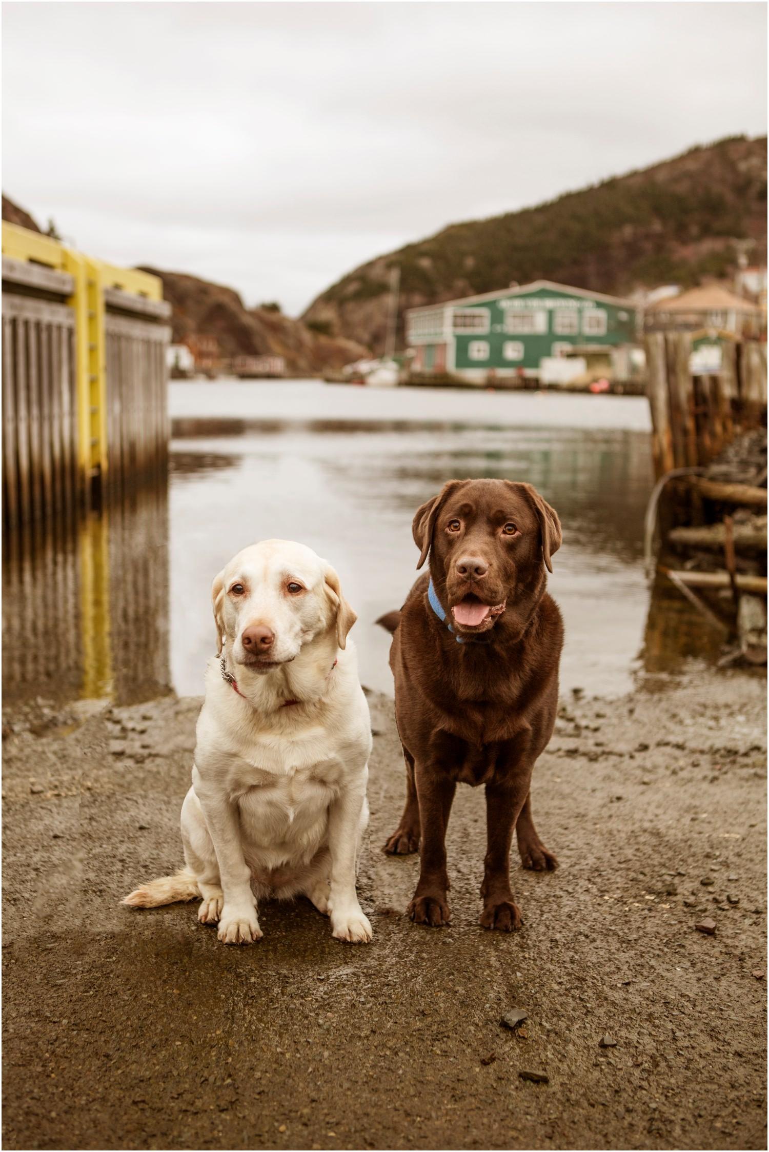 St John's Newfoundland Wedding Photographers Newfoundland Engagement Photographers Jennifer Dawe Photography_1269